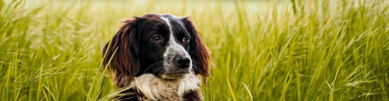Blog-leishmania-perros