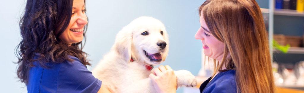 pack-cachorro-veterinario