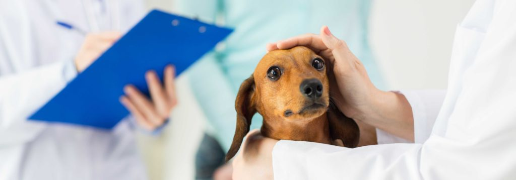 servicios-veterninarios-mascotas