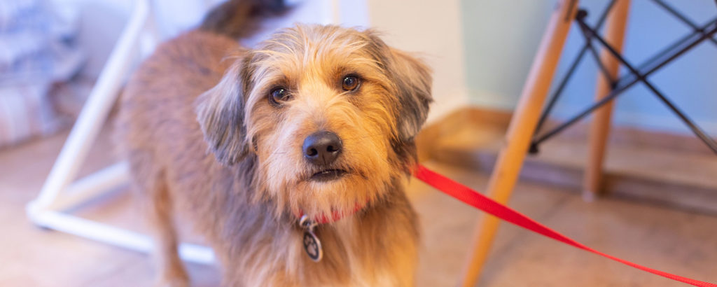 perro en tutatis veterinaria