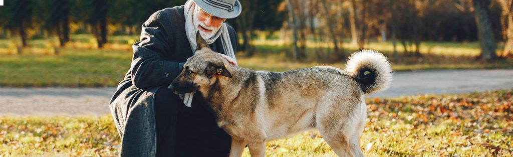 geriatrico-mascota-veterinario