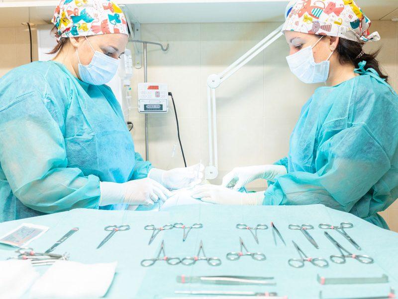 esterilizaacion-cirugia-perro-gato-veterinaria-centro