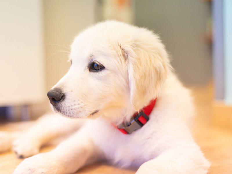 pack-cachorro-tutatis-veterinaria-barcelona